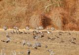 Wheeler National Wildlife Refuge - 12/14/2014