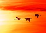 Wheeler National Wildlife Refuge - 01/10/2015 -Festival of the Cranes