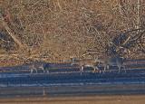 Wheeler National Wildlife Refuge - 01/21/2015