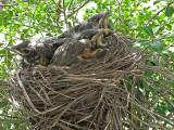 Wheeler National Wildlife Refuge -Special Spring Robins