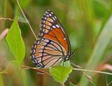 Wheeler National Wildlife Refuge - 06/27/2015