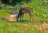 Wheeler National Wildlife Refuge - 08/27/2015