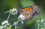 Wheeler National Wildlife Refuge - 09/08/2015