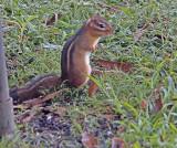 Wheeler National Wildlife Refuge - 09/14/2015