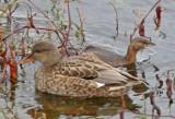 Wheeler National Wildlife Refuge - 12/21/2015