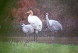 Wheeler National Wildlife Refuge - 01/09/2016 - Festival of Cranes