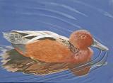 Wheeler National Wildlife Refuge - 03/29/2016 - Junior Duck Stamp Contest