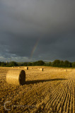 Bales at Broadclyst