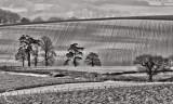 Devon fields in morning sunlight