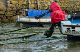 A 'long lens'at Mousehole in Cornwall?
