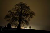 Trees set against urban light in Devon