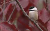 Our Backyard Birds