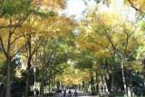 Parque de Maria Luisa. Colores de Otoño