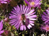 Blanes. Jardins Botànic Marimurtra