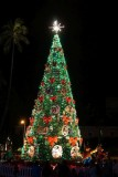 Honolulu Christmas Tree