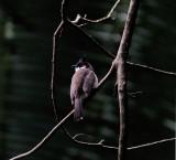 honolulu_lyon_arboretum
