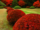 Red Leaves 2016 日本紅葉