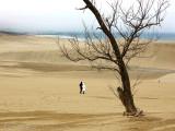 Tottori Sand Dunes 鳥取砂丘