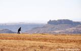 IMG_8350001.jpg - Basotho Herd Boy