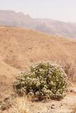 IMG_8574001.jpg - Maliba | Maluti Mountains