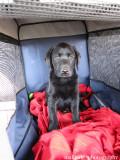 On her way home [8 weeks]