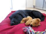 Sleeping with Mr Bear [8 weeks]