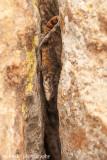 IMG_1443001.jpg - Lizard