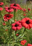 IMG_7748001.jpg - Flora of Lesotho