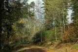 forêt automnale