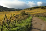 autumn walk in the Vosges forest and in the vineyards