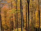 forêt du Nideck #3
