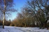 forêt du Bischenberg