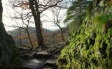 la forêt de Ribeauvillé