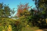 l'automne arrive doucement