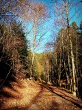 la forêt d'Oberhaslach
