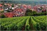 alsatian vineyard - vignoble alsacien