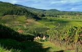le vignoble d'Andlau