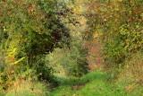 le petit chemin en automne
