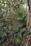 Mahé forest