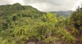 Vegetation at Bernica.