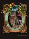 Romantic Cats
