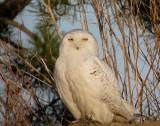 Birds of Plum Island Calendar 2015