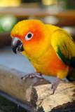 AVILON - Wildlife Conservation Foundation