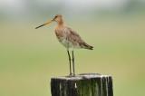 Birds of Netherlands