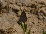 Unidentified Butterflies
