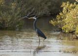 Birdtrip to Egypt 2013