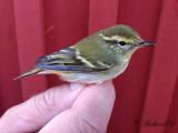 Birdtrip to Stora Fjäderägg 2014