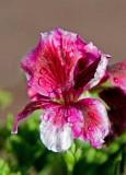 3 flower.jpg