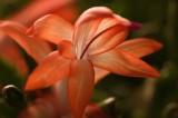3 orange flower.jpg