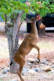 5 Deer.jpg